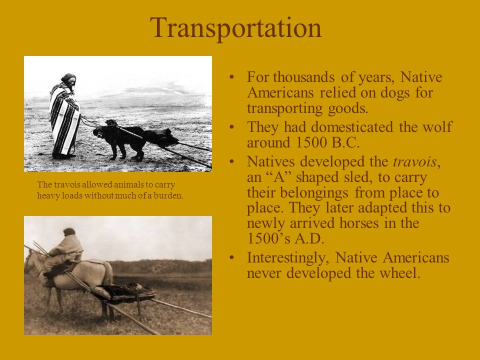 Transportation For thousands of years, Native Americans relied on dogs for transporting goods. They had domesticated the wolf around 1500 B.C.