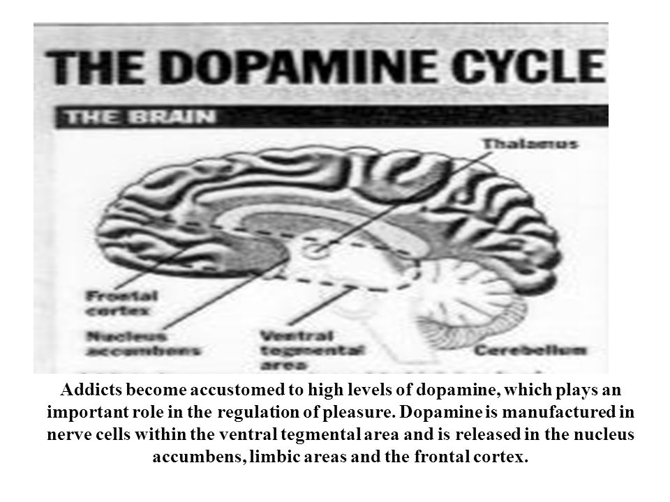 Addicts become accustomed to high levels of dopamine, which plays an important role in the regulation of pleasure.