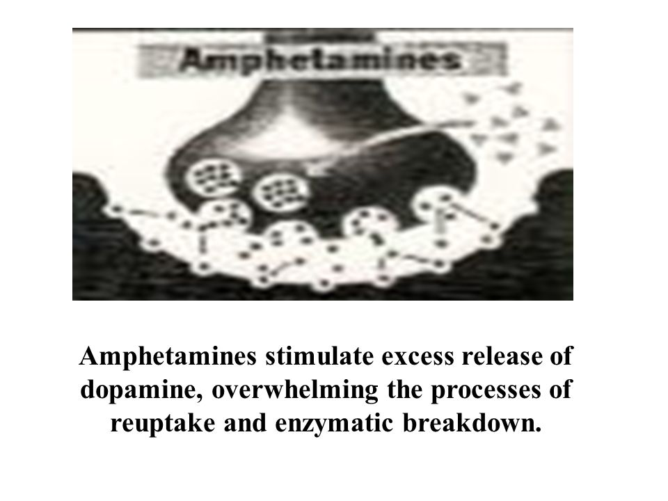 Amphetamines stimulate excess release of dopamine, overwhelming the processes of reuptake and enzymatic breakdown.