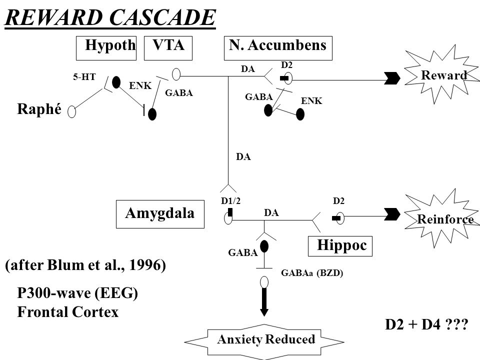 REWARD CASCADE Hypoth VTA N. Accumbens Raphé Amygdala Hippoc