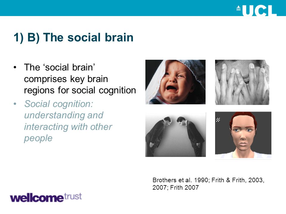 1) B) The social brain The 'social brain' comprises key brain regions for social cognition.