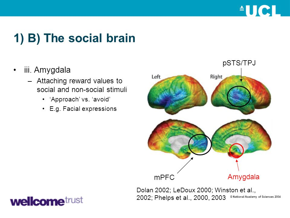 1) B) The social brain iii. Amygdala pSTS/TPJ