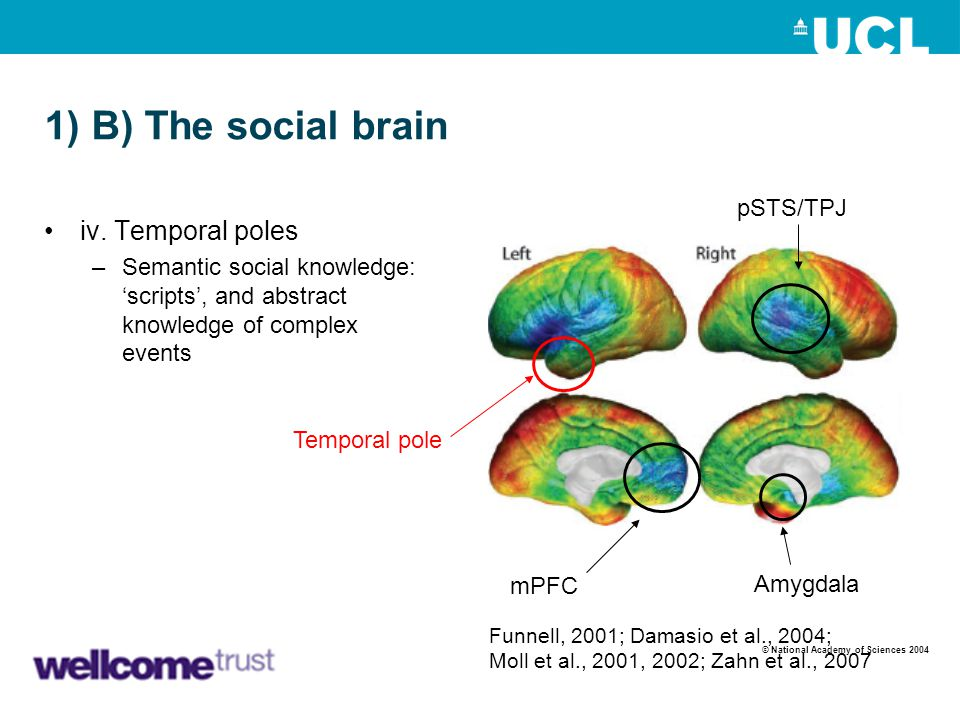 1) B) The social brain iv. Temporal poles pSTS/TPJ