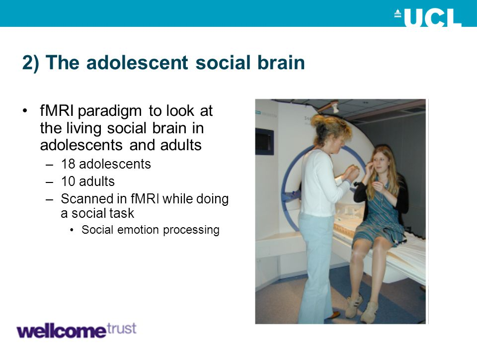 2) The adolescent social brain