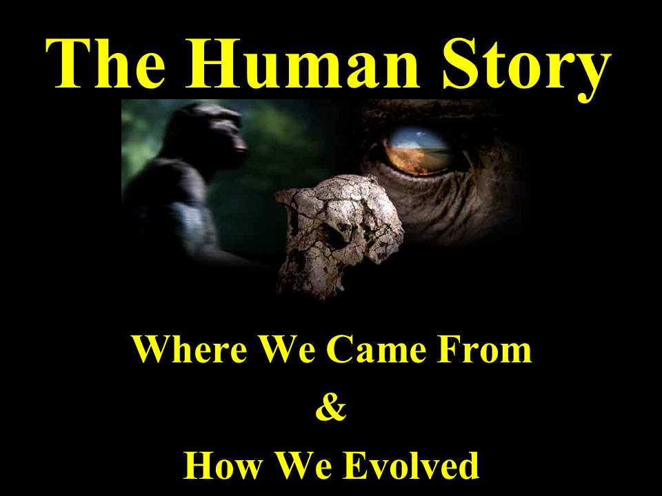 Where We Came From & How We Evolved