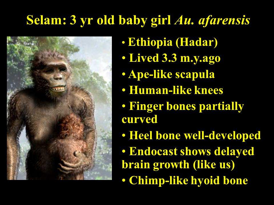 Selam: 3 yr old baby girl Au. afarensis