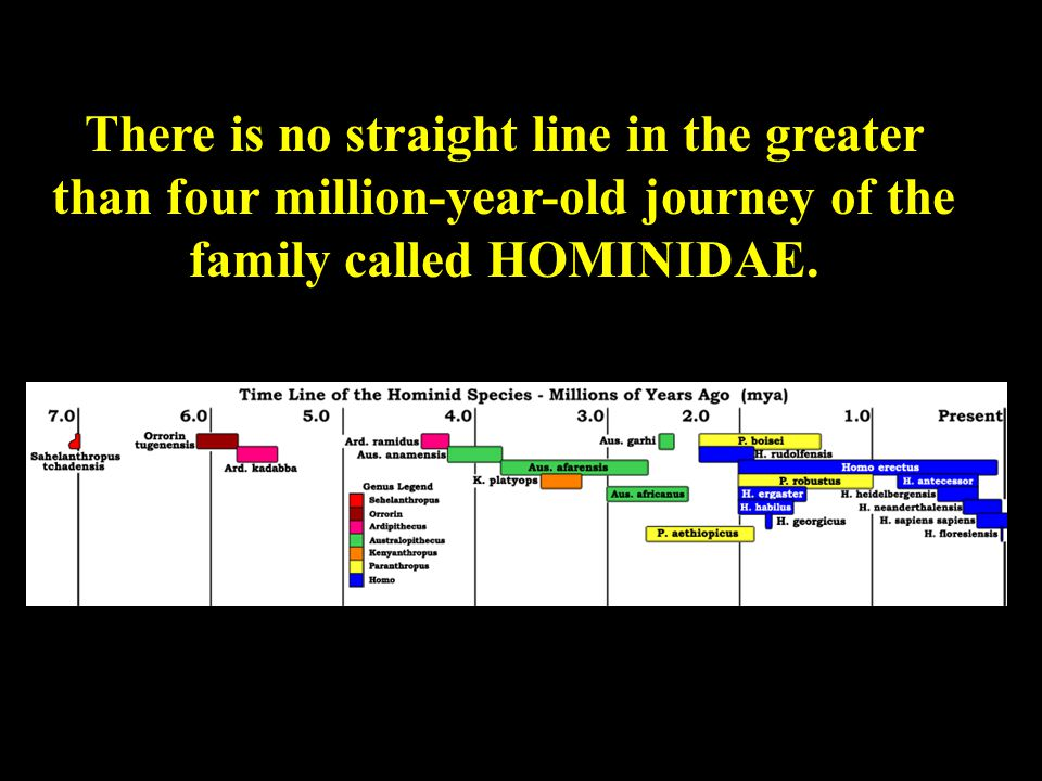 There is no straight line in the greater than four million-year-old journey of the family called HOMINIDAE.