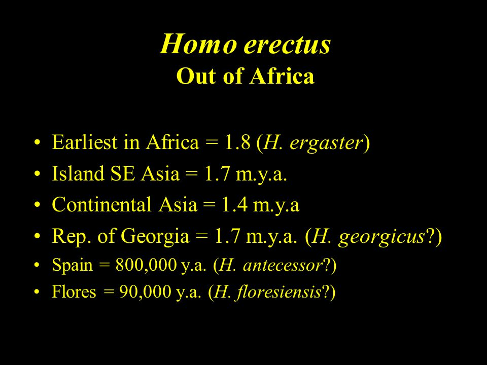 Homo erectus Out of Africa