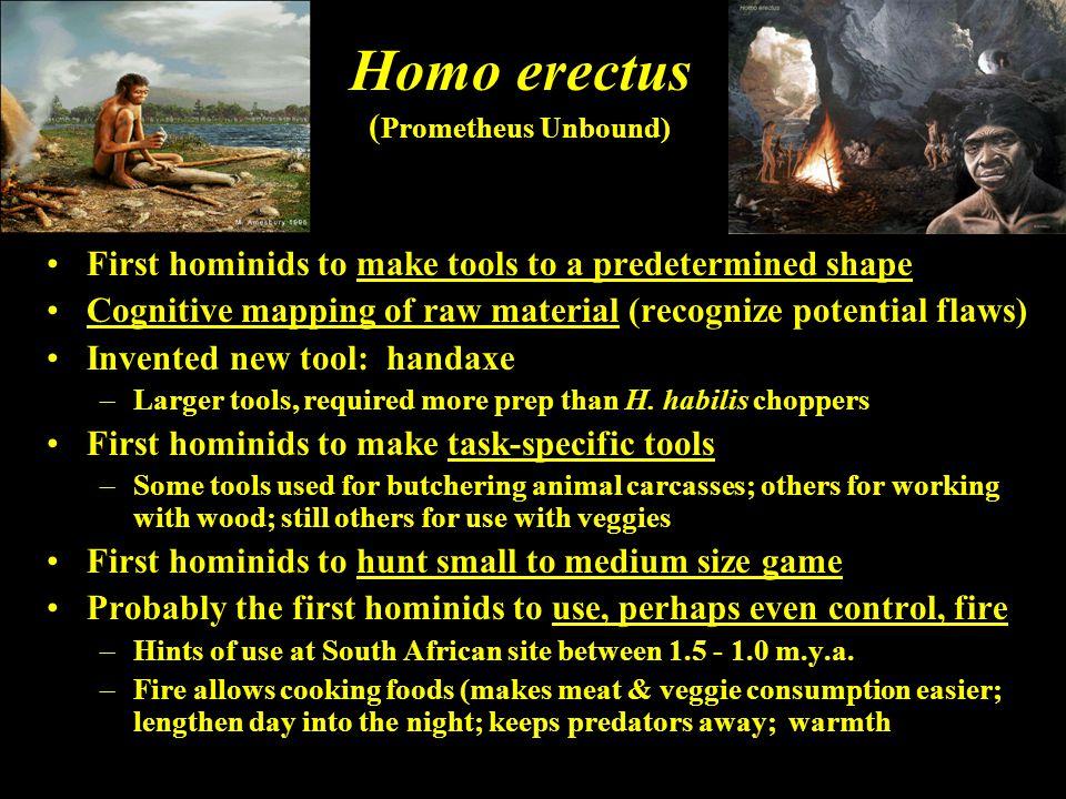 Homo erectus (Prometheus Unbound)