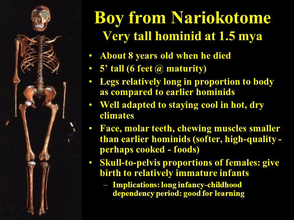 Boy from Nariokotome Very tall hominid at 1.5 mya