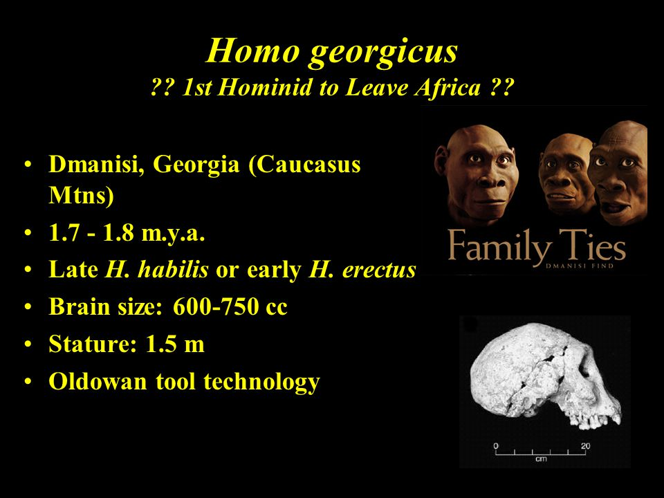 Homo georgicus 1st Hominid to Leave Africa