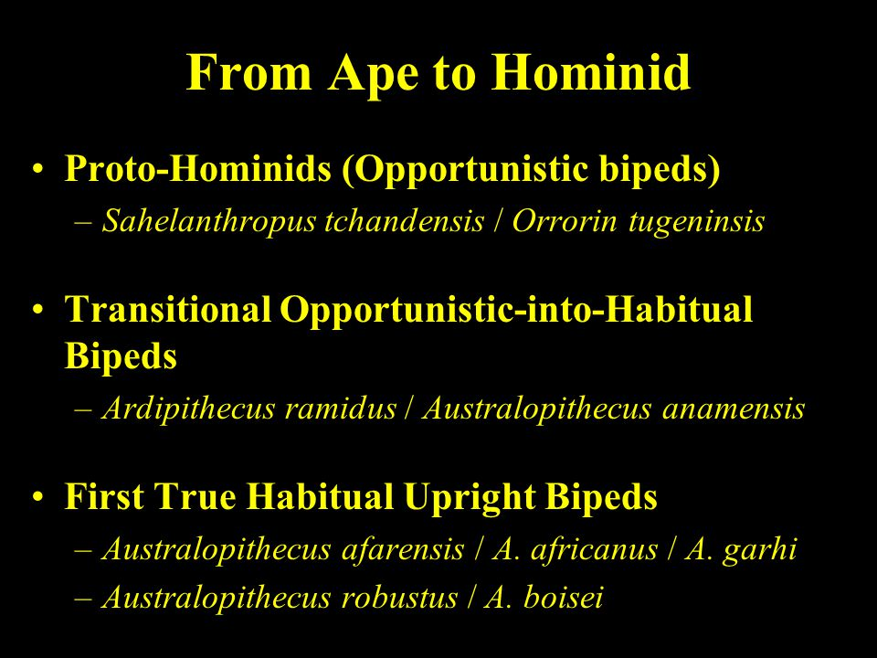 From Ape to Hominid Proto-Hominids (Opportunistic bipeds)