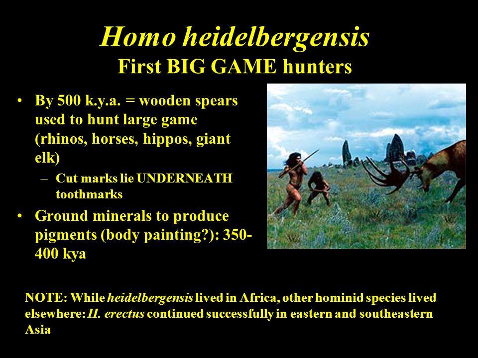 Homo heidelbergensis First BIG GAME hunters