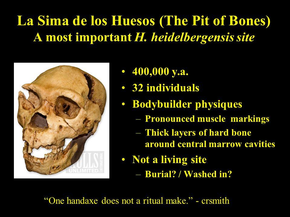 La Sima de los Huesos (The Pit of Bones) A most important H