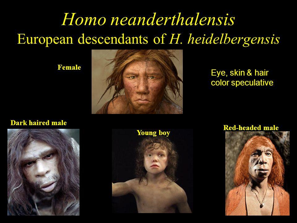Homo neanderthalensis European descendants of H. heidelbergensis