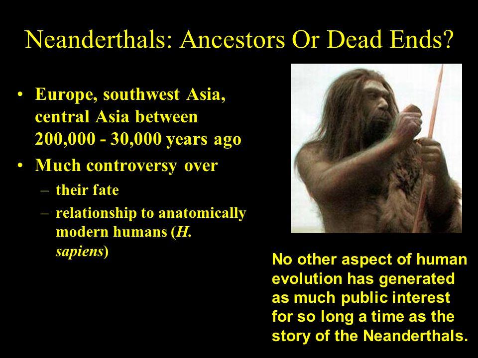 Neanderthals: Ancestors Or Dead Ends