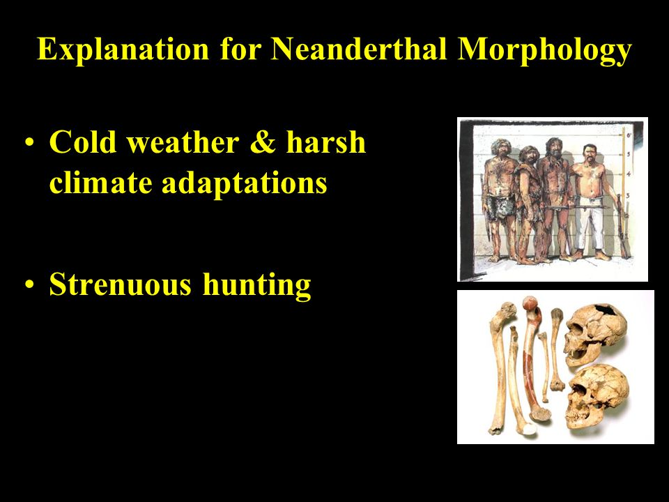 Explanation for Neanderthal Morphology