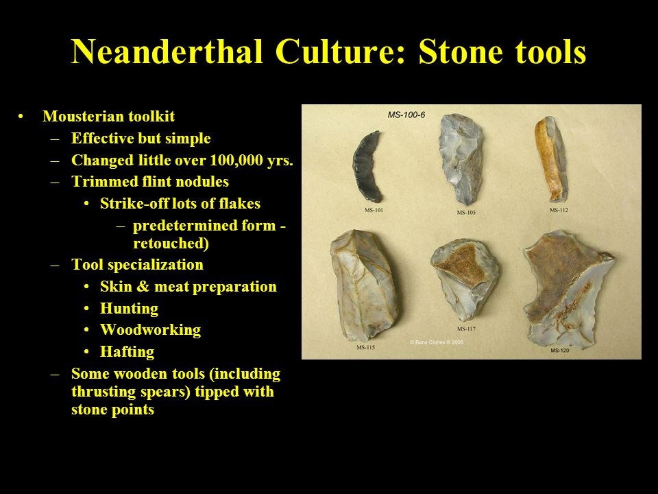 Neanderthal Culture: Stone tools