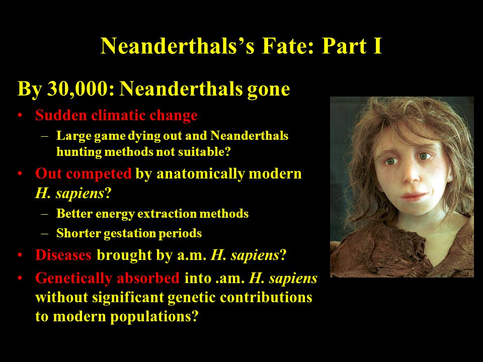 Neanderthals's Fate: Part I