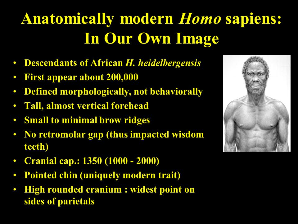 Anatomically modern Homo sapiens: In Our Own Image