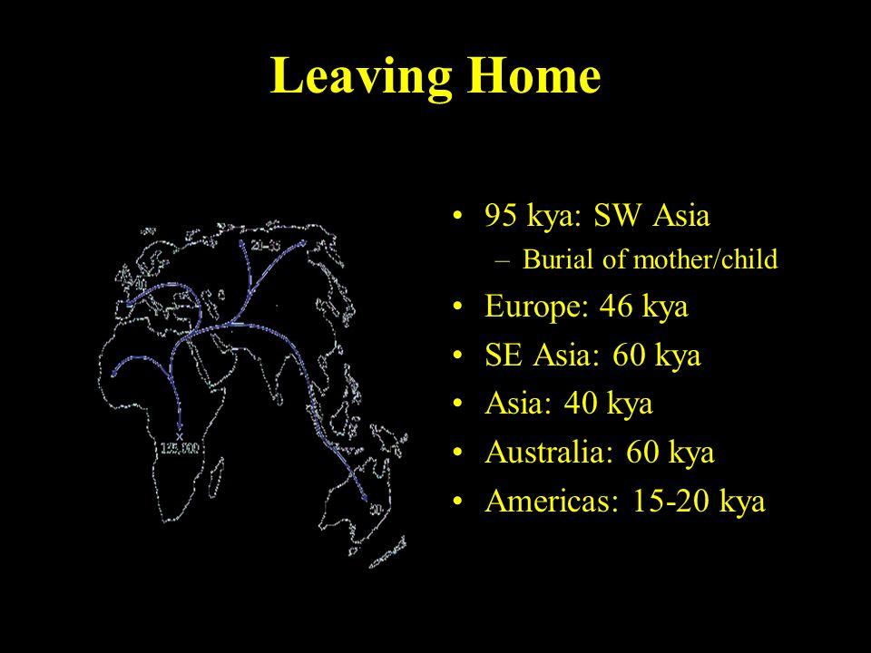Leaving Home 95 kya: SW Asia Europe: 46 kya SE Asia: 60 kya