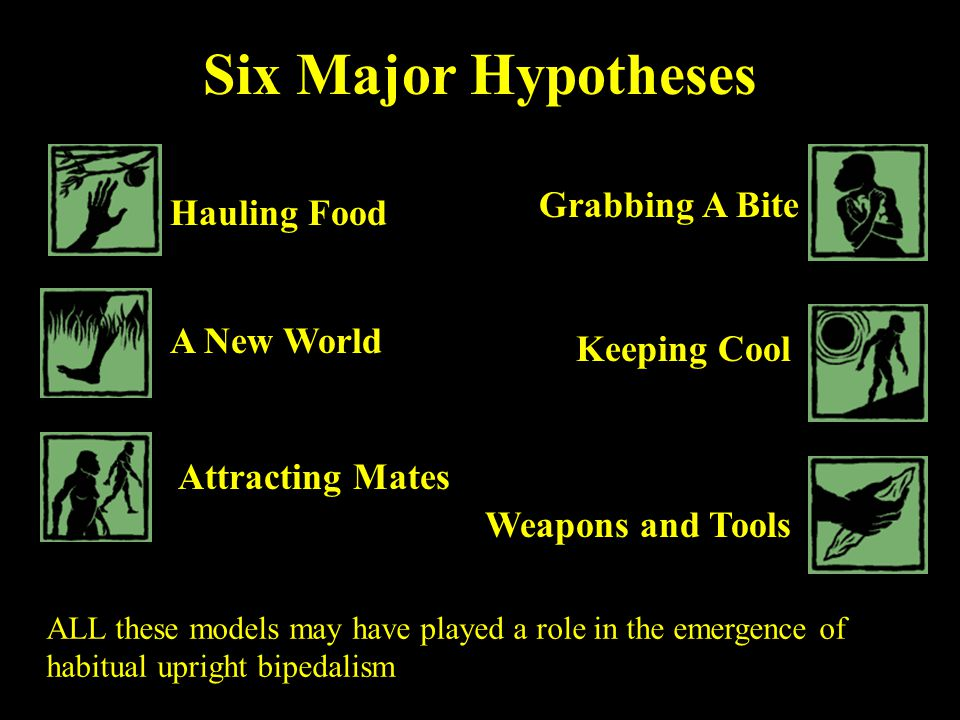 Six Major Hypotheses Grabbing A Bite Hauling Food A New World