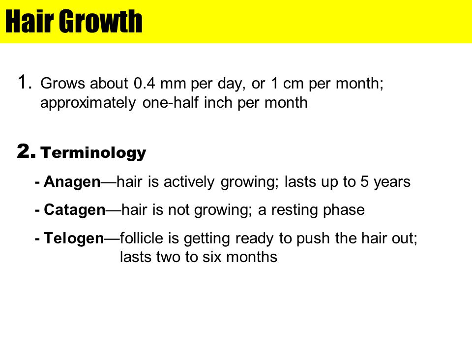 Hair Growth Grows about 0.4 mm per day, or 1 cm per month; approximately one-half inch per month. Terminology.