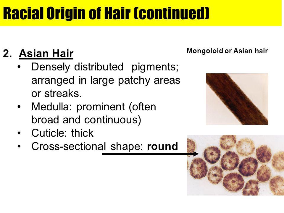 Racial Origin of Hair (continued)