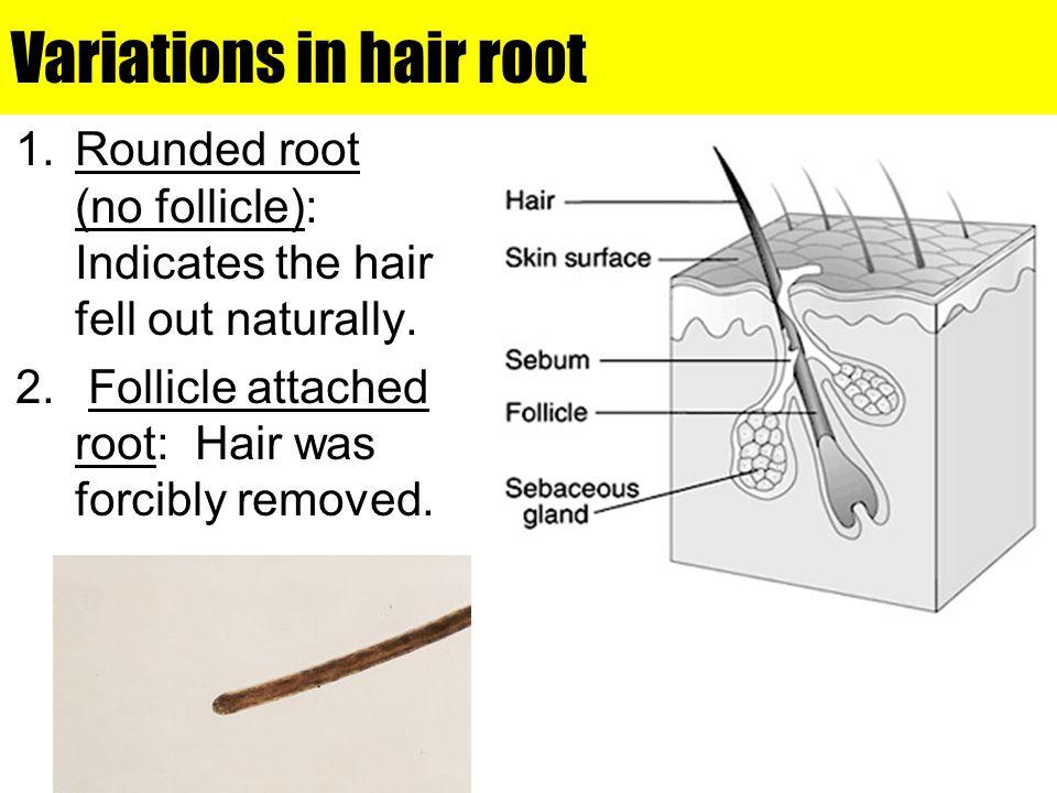 Variations in hair root