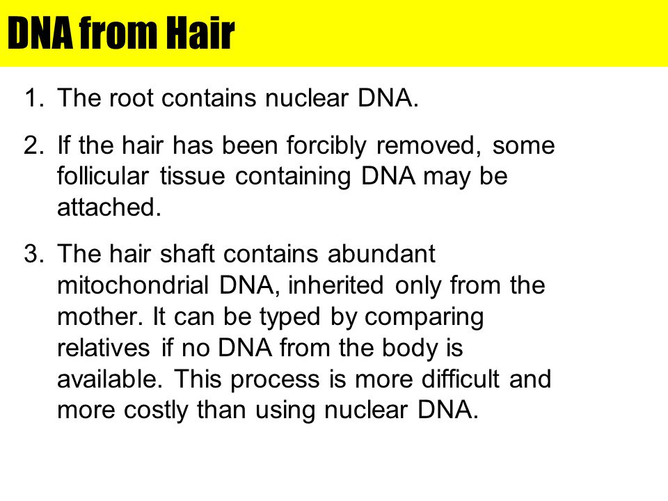DNA from Hair The root contains nuclear DNA.