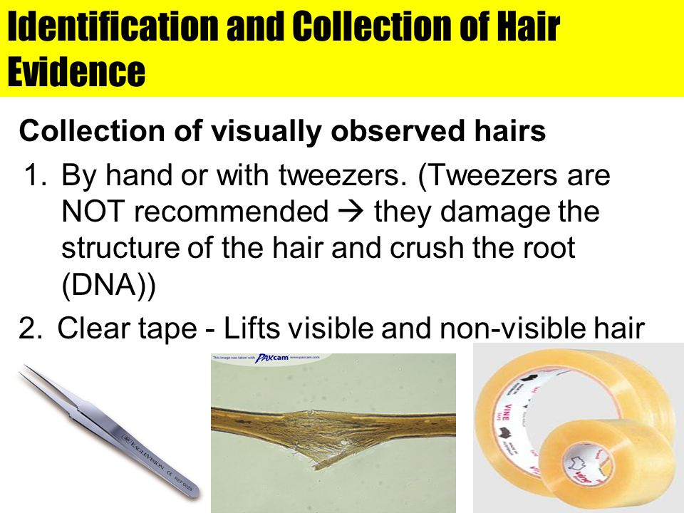 Identification and Collection of Hair Evidence