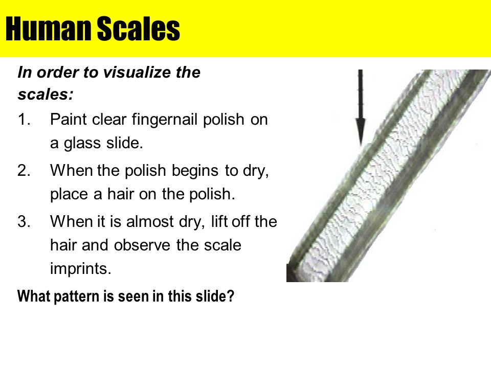 Human Scales In order to visualize the scales: