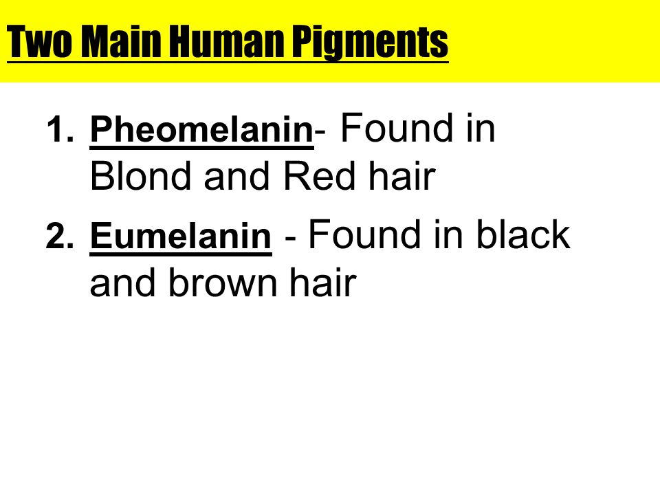 Two Main Human Pigments