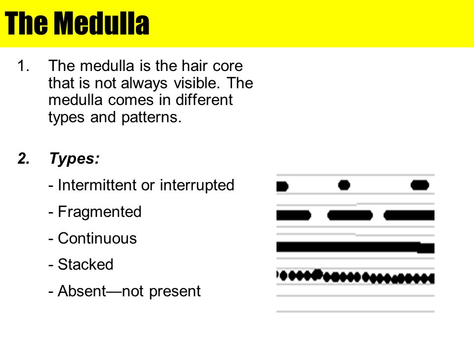 The Medulla The medulla is the hair core that is not always visible. The medulla comes in different types and patterns.