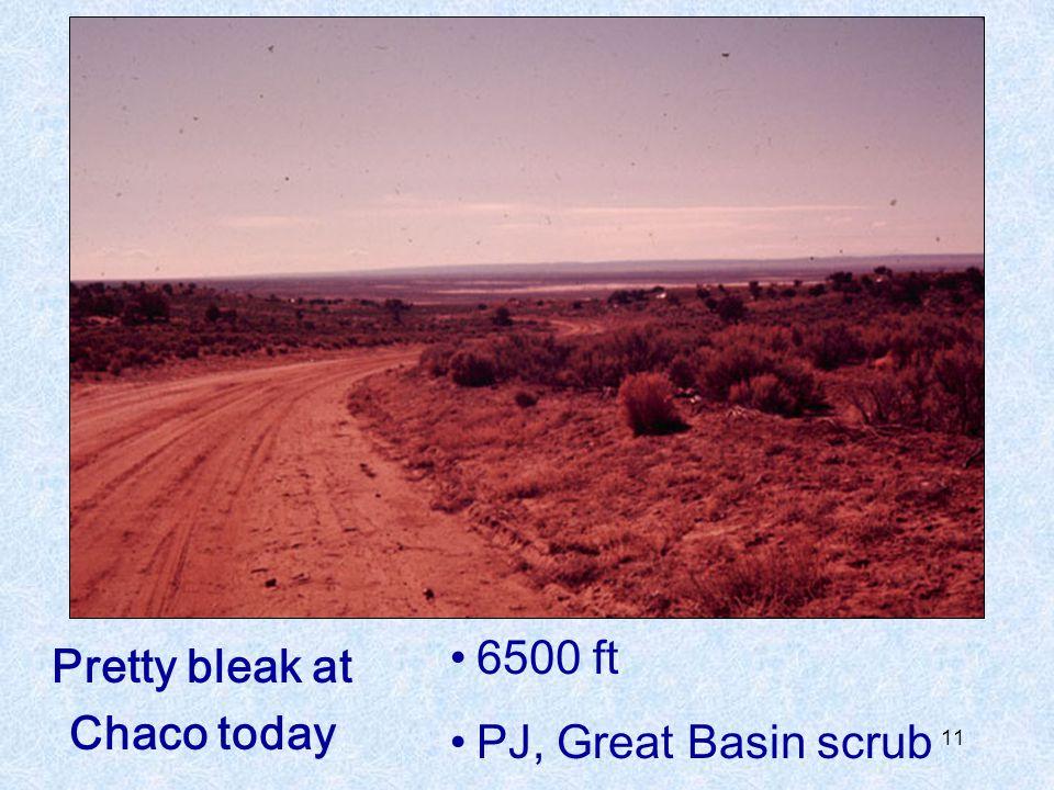 6500 ft PJ, Great Basin scrub Pretty bleak at Chaco today