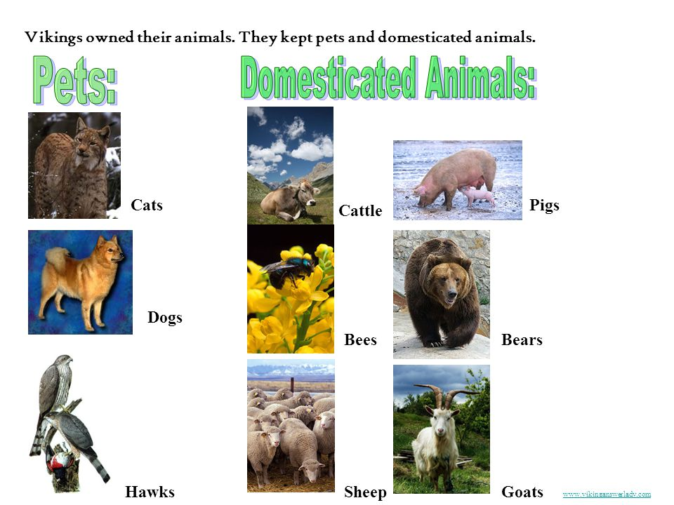 Domesticated Animals: