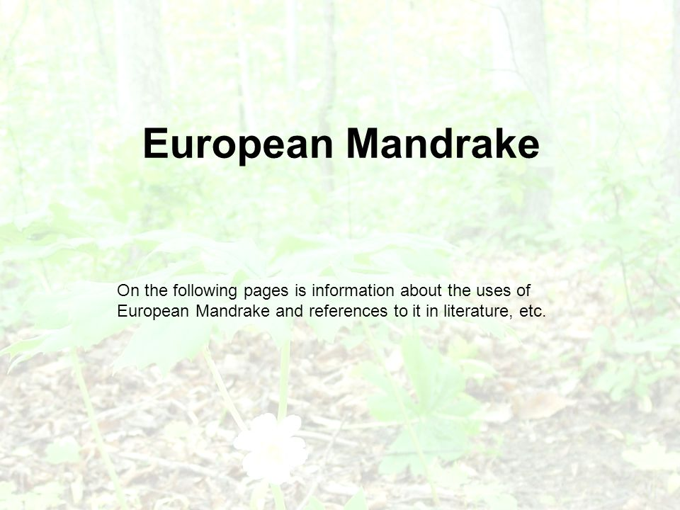 European Mandrake On the following pages is information about the uses of European Mandrake and references to it in literature, etc.