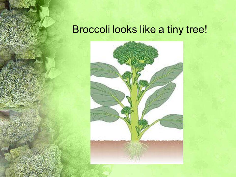 Broccoli looks like a tiny tree!