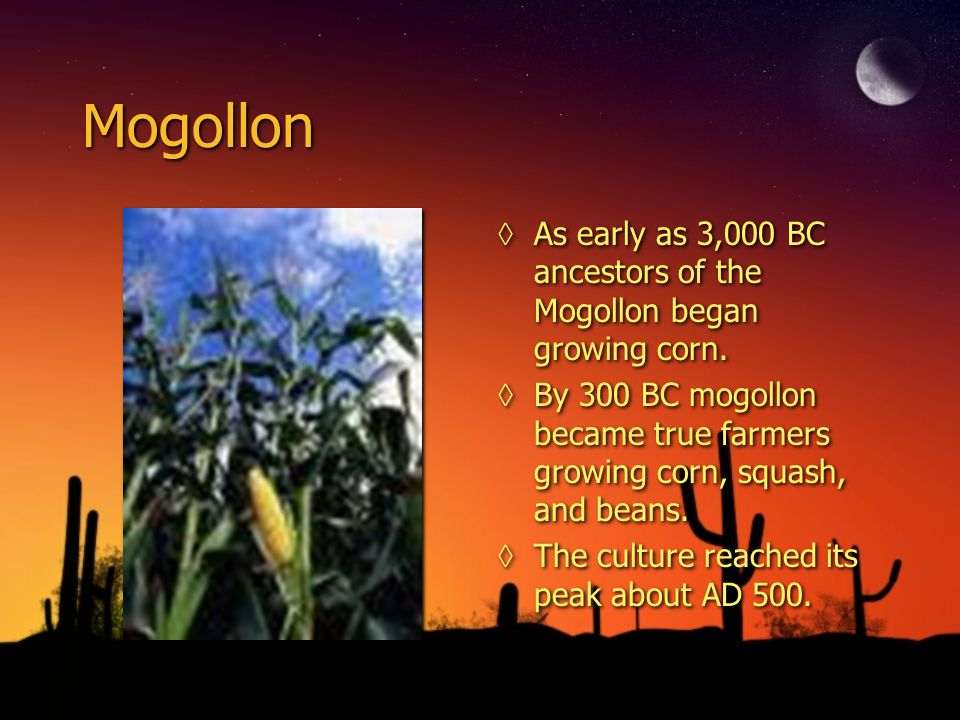 Mogollon As early as 3,000 BC ancestors of the Mogollon began growing corn. By 300 BC mogollon became true farmers growing corn, squash, and beans.