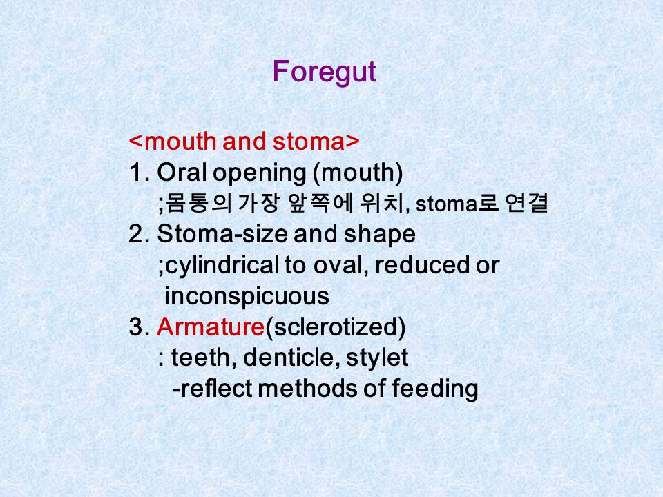 Foregut <mouth and stoma> 1. Oral opening (mouth)