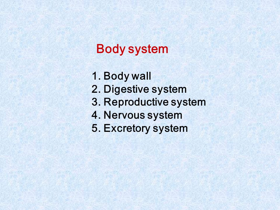 Body system 1. Body wall 2. Digestive system 3. Reproductive system