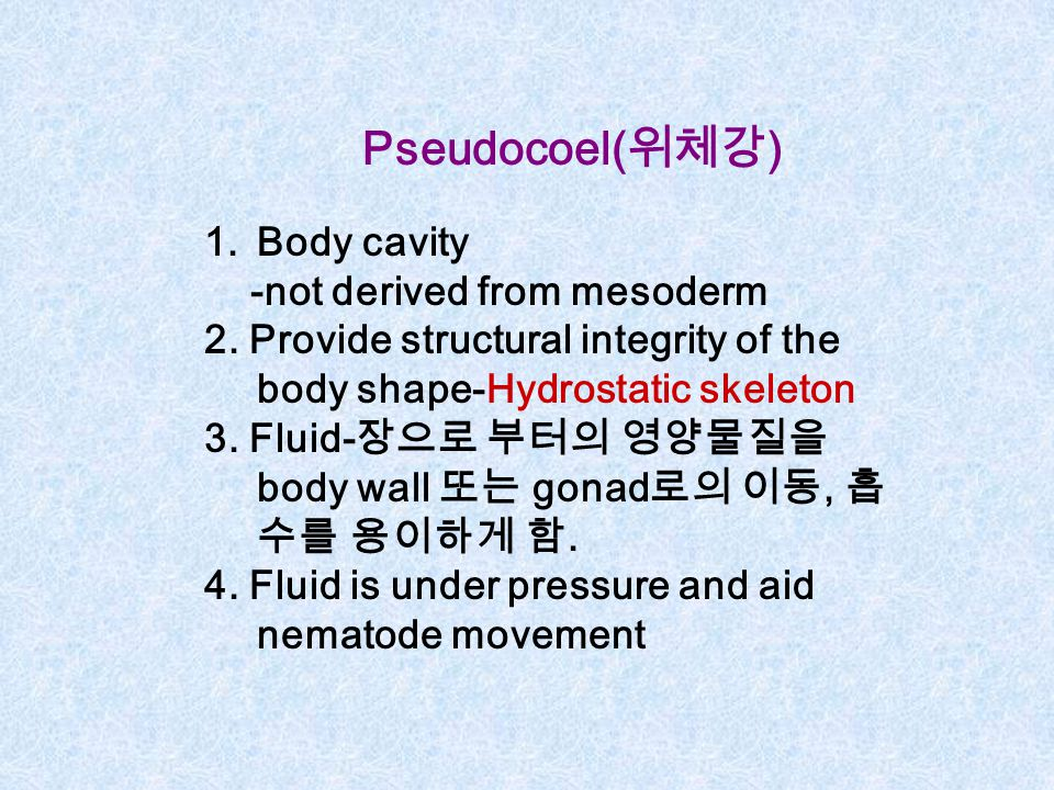 Pseudocoel(위체강) Body cavity -not derived from mesoderm