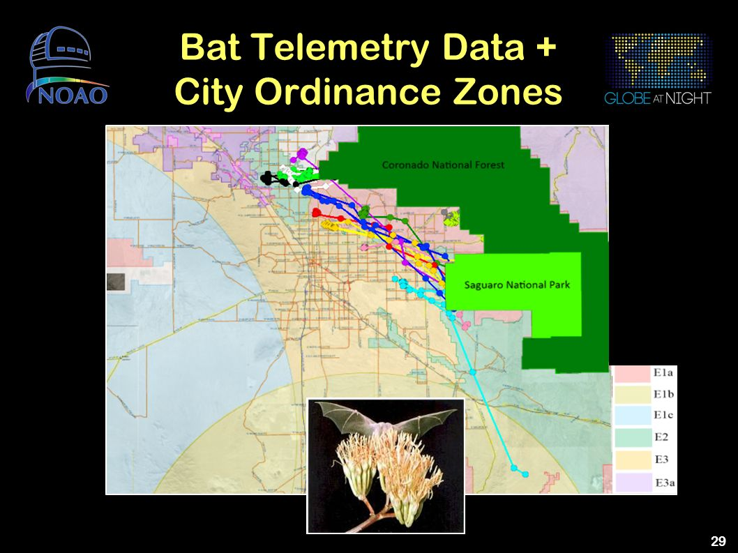 Bat Telemetry Data + City Ordinance Zones