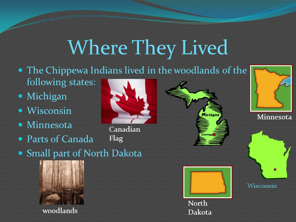 Where They Lived The Chippewa Indians lived in the woodlands of the following states: Michigan. Wisconsin.