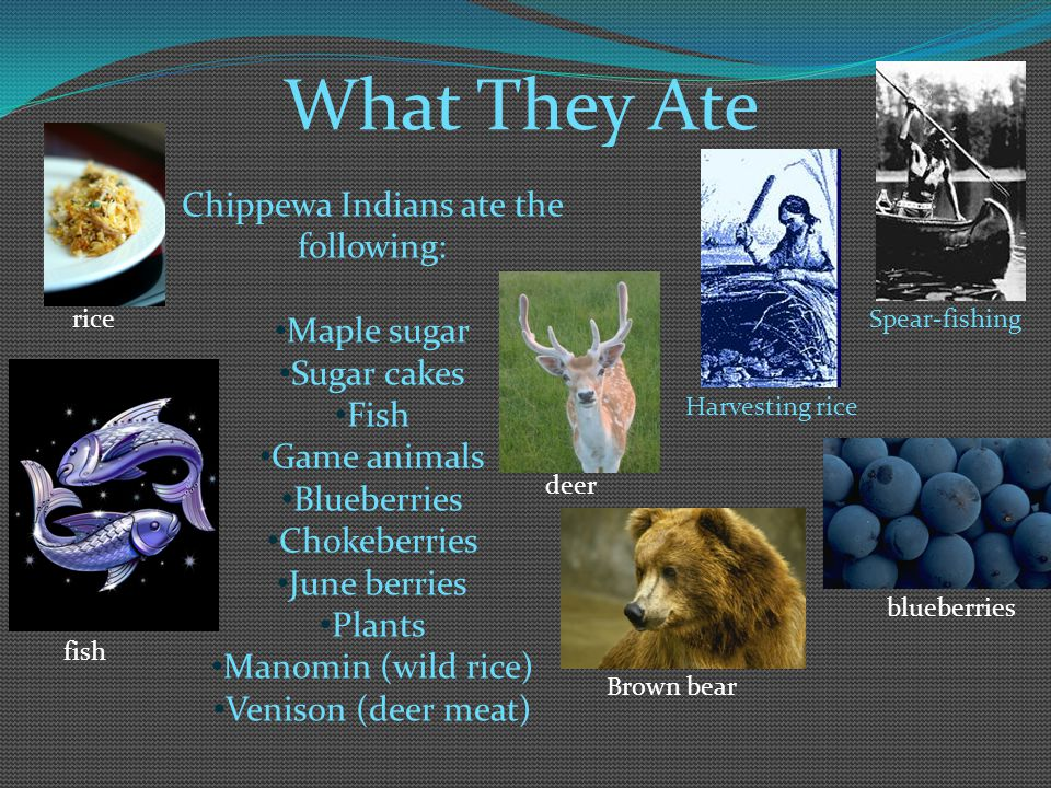 Chippewa Indians ate the following: