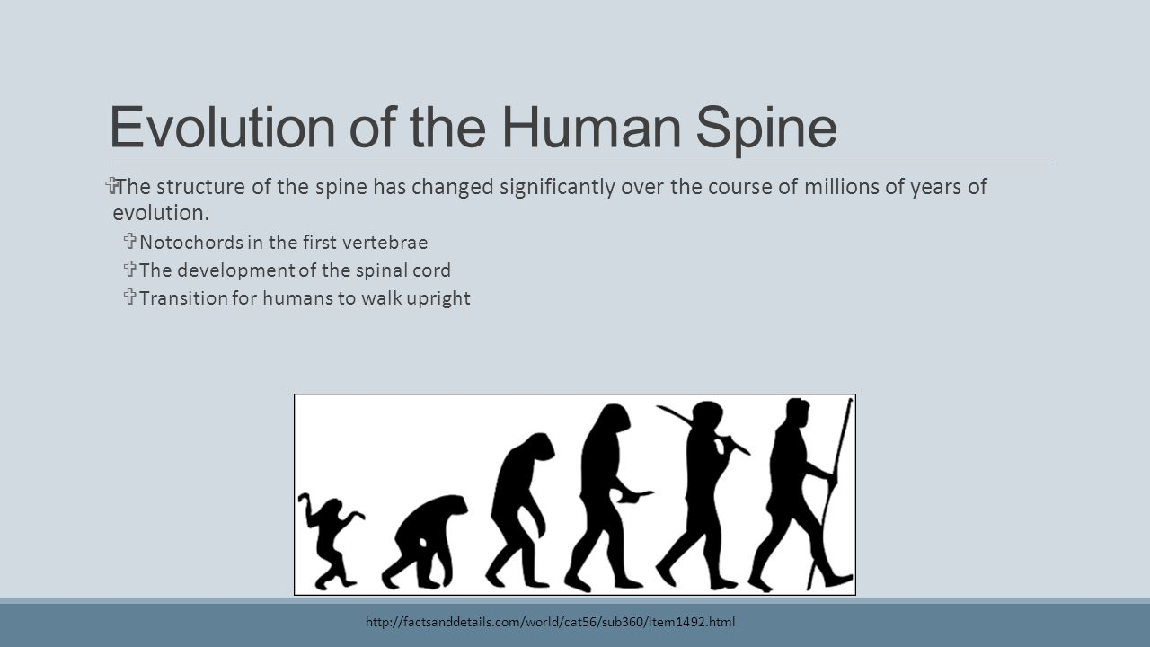 Evolution of the Human Spine