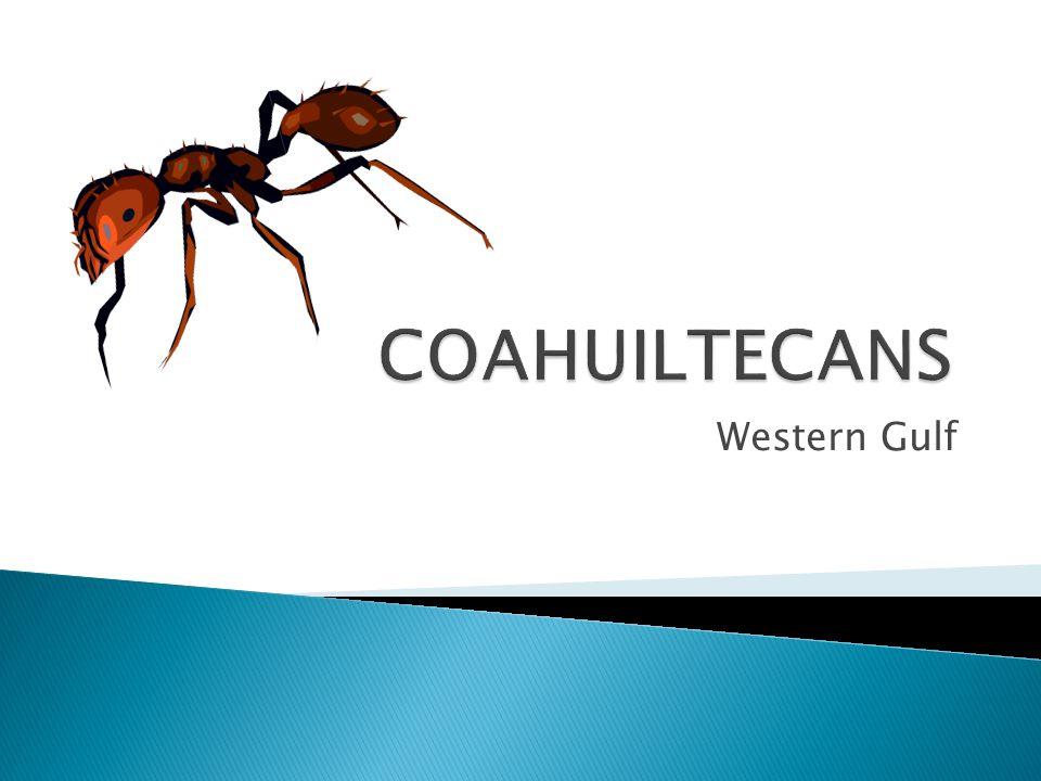 COAHUILTECANS Western Gulf