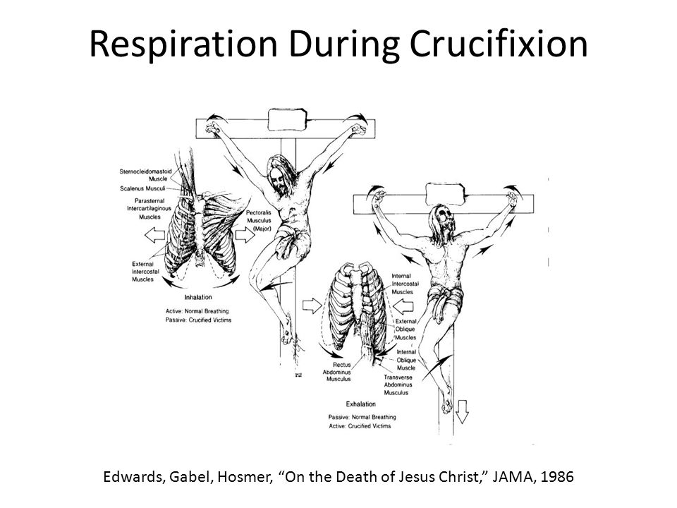 Respiration During Crucifixion