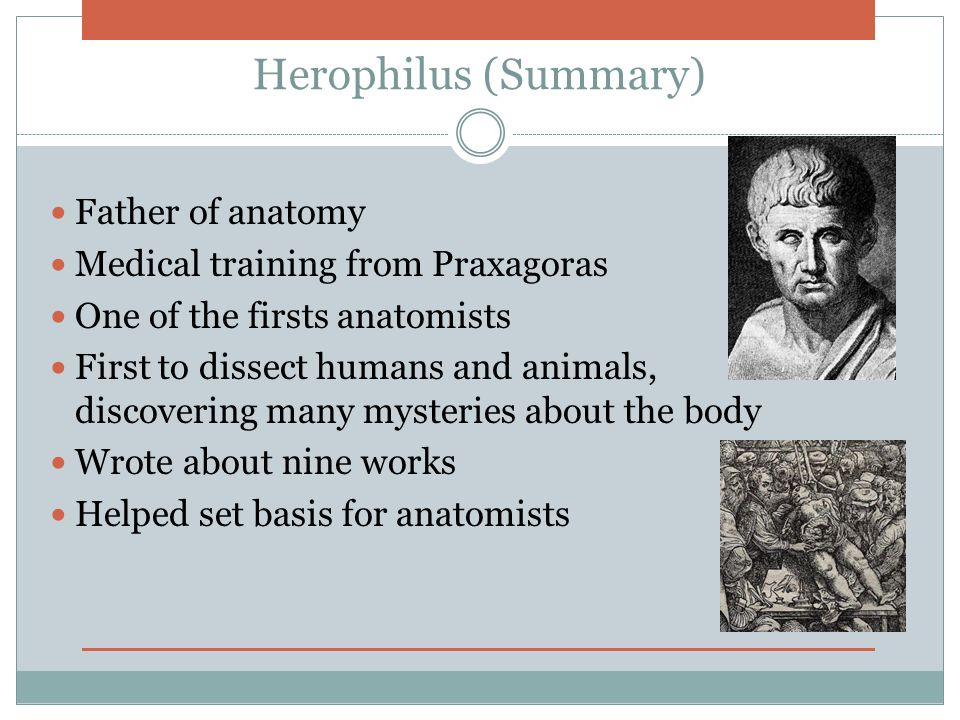 Herophilus (Summary) Father of anatomy