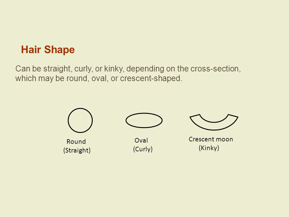 Hair Shape Can be straight, curly, or kinky, depending on the cross-section, which may be round, oval, or crescent-shaped.